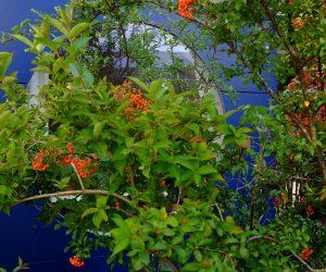 baluer Gartenraum aus Holt